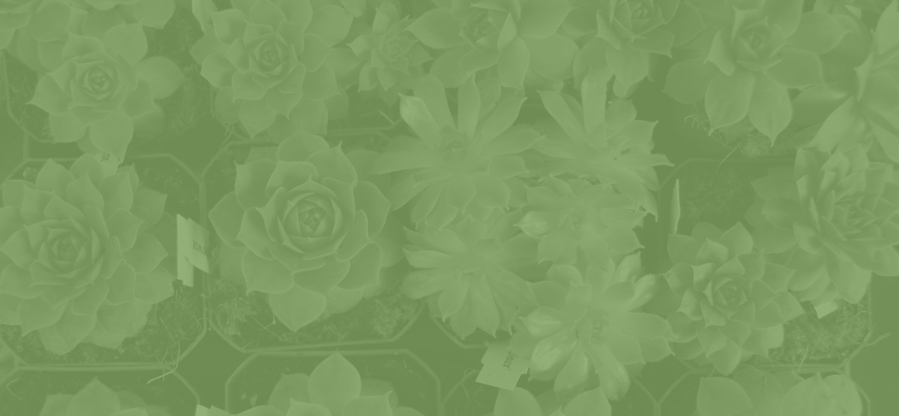 Illustration of a green patterned background for the Cultivate project